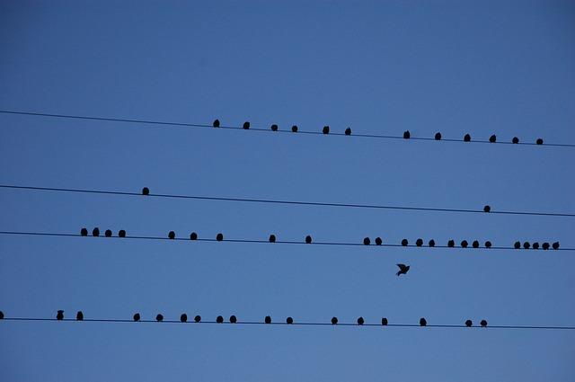 stěhovaví ptáci, drát